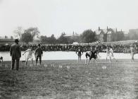 A race in Carmarthen Park, c. 1900