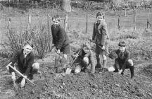 Schoolboys learning gardening skills, 1939