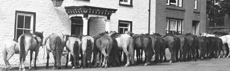 Horses outside the Foelrallt, Llanddewibrefi