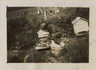 Beekeeping in Llanfihangel-ar-Arth