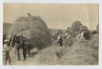 Wrth y gwair yn ardal Llanfihangel-ar-Arth