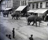 Circus elephants parading through Carmarthen in...