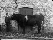 Mr Foulkes' bull