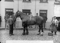 horse (Hughes, Bala)