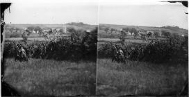 Out for a walk (stereograph)