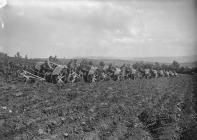 Line of tractors ploughing