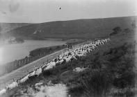 Elan Valley view with men rounding sheep on...