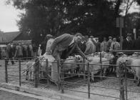 By-election candidate at a sheep market, 1939