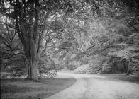 Clungunford Hall driveway