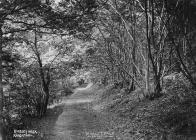 Kinsley walk Knighton