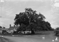 """The """" Arbor Tree"""" Brampton Brian"""