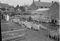Annual sheep auction at Clun