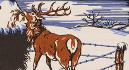 The story of the red-deer