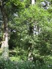 Woodland in the Garw valley, Llangeinor, 2013