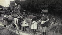 Cockles Women of Penclawdd c1906