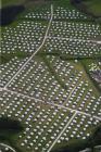 SITE OF BALA EISTEDDFOD 1997 AND 2009, LLANFOR