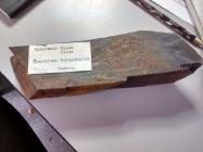 Slate specimen, Oriel Ynys Môn