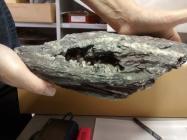 Phylite with quartz crystals, Oriel Ynys Môn