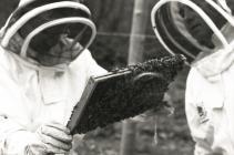 Examining beehives, Bontgoch 2015