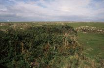 Skokholm - Scrub patch and landscape view from...