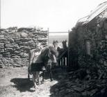 Skokholm - Ann Lockley with ponies at courtyard...