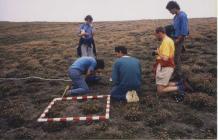 Blue Pimpernel Monitoring