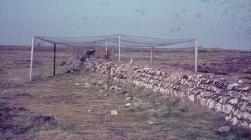 Skokholm - 1960's Heligoland wall trap