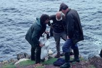 Skokholm - Alice Williams figurehead in 1991