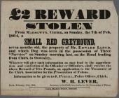 Rewards Stolen dog poster