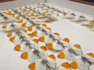 33 display cases and boxes of insects (mainly...