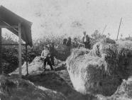 Haymaking at Ynysywern Farm