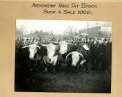Fat Stock sale Christmas 1920