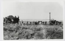 [Threshing?] in the valley