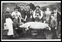 Pig killing, Maescar, about 1900