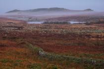 Misty Dawn at North Pond, 8 April 2017