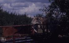 Wick: Mammal & Landscape