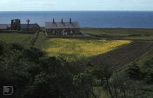 Bardsey Island: Plant/tree & History/Archaeology