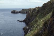 Caldey Island: Bird