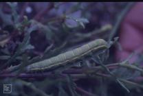 Caldey Island: Invertebrate