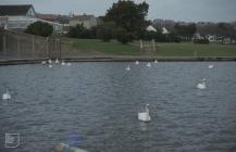 Barry, Vale of Glamorgan: Bird & Water