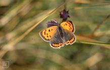 Nelson: Invertebrate & Lepidoptera