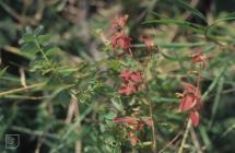 Tongwynlais:  & Plant/tree