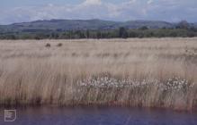 Tregaron Bog: Landscape