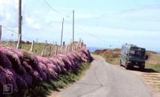 Dinas Head: Plant/tree & Landscape