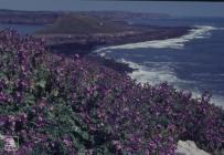 Worm's Head, Rhossili: Plant/tree & Landscape