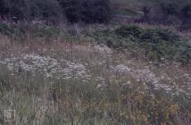Pen Rhys: Plant/tree & Landscape