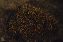Eglywysilan: Plant/tree