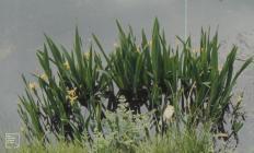 Glyncornel, Tonypandy: Plant/tree & water