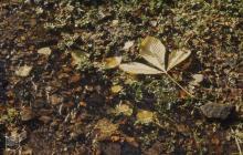 Glyncornel, Tonypandy: Plant/tree & Nasturtium