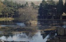 Glyncornel, Tonypandy: Water & Plant/tree